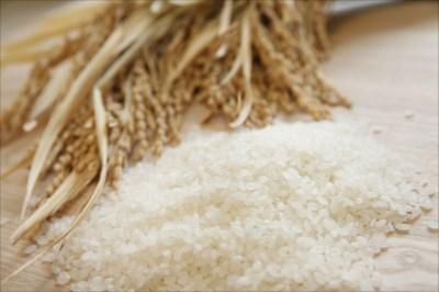 ミルキークイーンの通販は栄屋ファーム!玄米など、農家直送のお米をお召し上がりいただけます