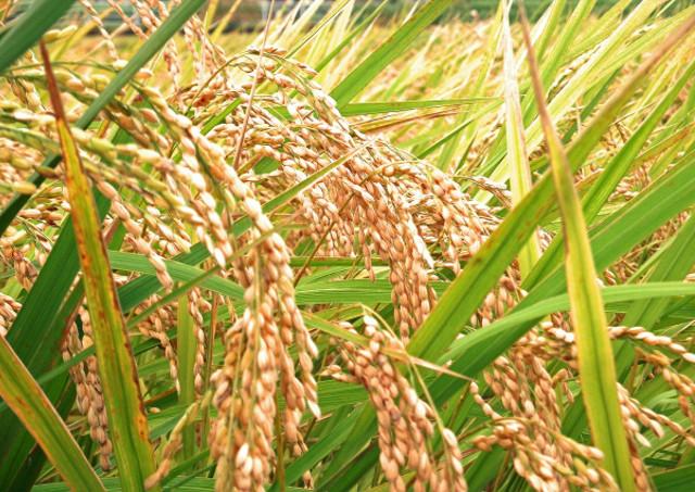 米穀年度制による時期